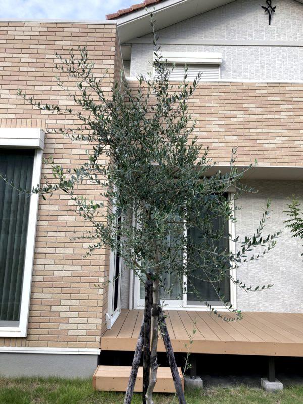 symbol-tree_04
