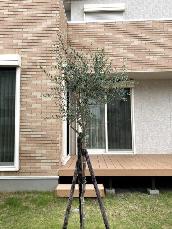 symbol-tree_05