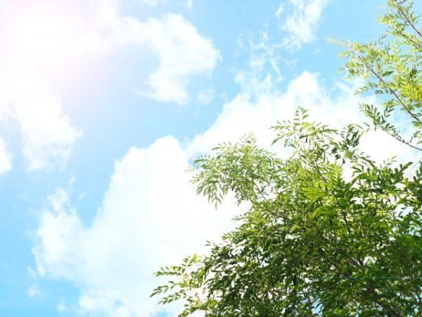 symbol-tree_06