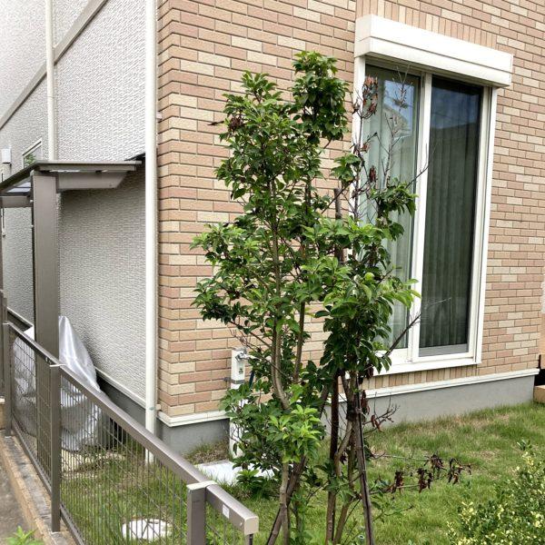 symbol-tree_10